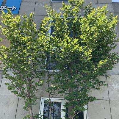 Leap8(リープエイト)宇都宮市戸祭町オフィスの設備・サービス:花壇4
