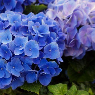 Leap8(リープエイト)宇都宮市戸祭町オフィスの設備・サービス:花壇2